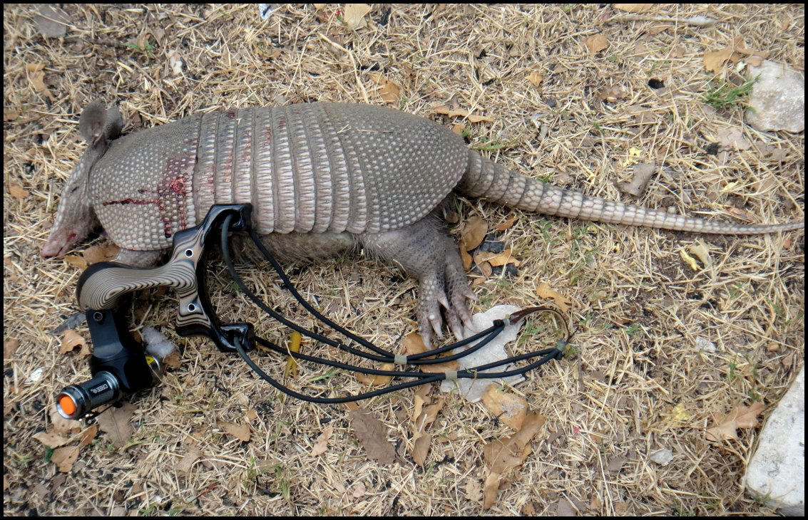 best caliber for armadillo